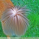 johima-HDR-dog-tail