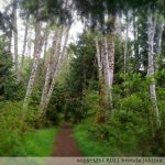 johima-ships-point-forest-walk