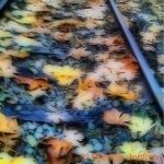 johima-maple-leaves-railway-track