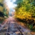 johima-railway-tracks-in-fall