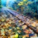 johima-railway-tracks-maple-leaves