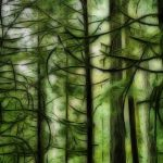 johima-cathedral-grove-vancouver-island