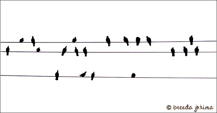 iPhone art by brenda johima : pigeons on a wire